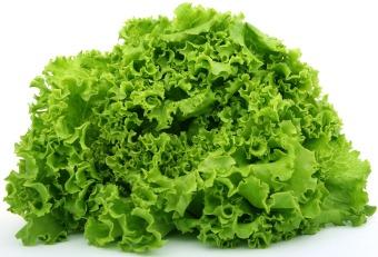 lettuce-1239155_1920